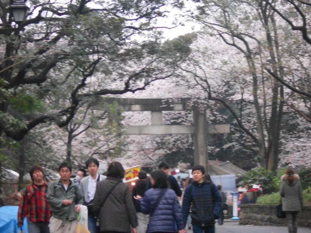 Em Tóquio, o parque Ueno é um dos maiores hotspots para ver as sakura.