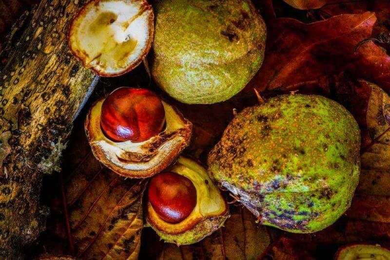 Okunitama Shrine Autumn Chestnut Festival 2019 lista festivais japao outono 2019