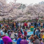 Sakura Folhas de Cerejeira Plano 2021 Imagem Destaque